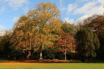 Bäume im Park von Pim van der Horst