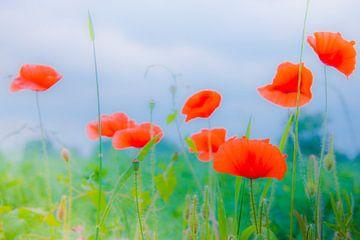 Wilde Mohnblumen auf einem Feld von Jille Zuidema