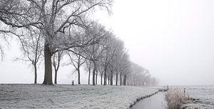 IJzig de winterlandschap tijdens een vroege nevelige ochtend