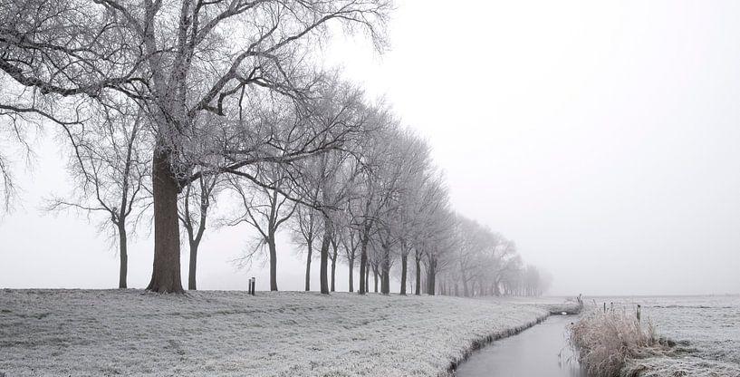 IJzig de winterlandschap tijdens een vroege nevelige ochtend  van Sjoerd van der Wal