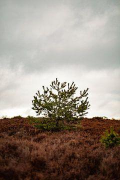 Minimalistisch landschap op de Veluwe van Marco Scheurink