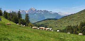 Frankrijk, Col d'Aspin van Ad Jekel