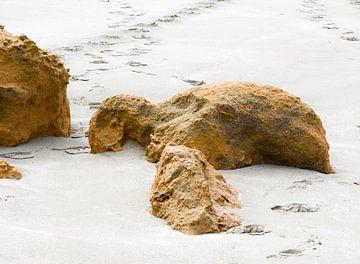 Schildpad op strand van Erna Kampman