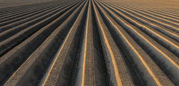 Kartoffelfeldmuster mit in Böschungen geformter Erde, um das optimale Wachstum der Kartoffelpflanze  von Sjoerd van der Wal