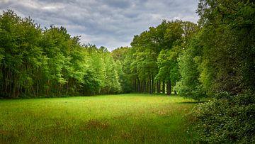 Märchenwald zum Wegträumen von Jenco van Zalk