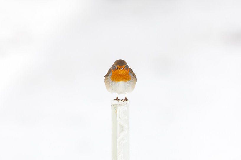 Robin im Schnee im Winter von Bas Meelker