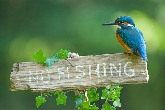 IJsvogel - No fishing