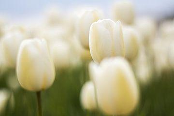 Weiße Tulpen von The All Seeing Eye Mariël de Vos