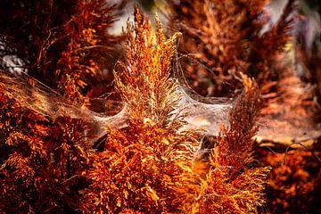 Silk Web In Glowing Amber Light No.3 van Urban Photo Lab