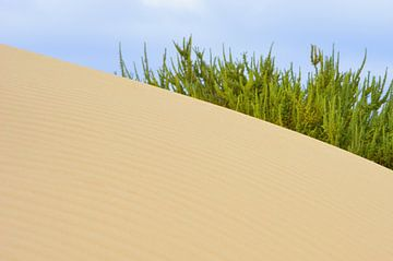 Duin landschap van Dustin Musch