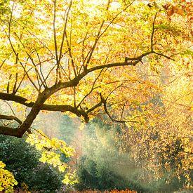 Magisch geel bos van Marianne Rouwendal