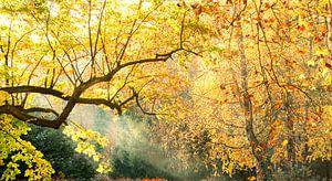 Magisch geel bos