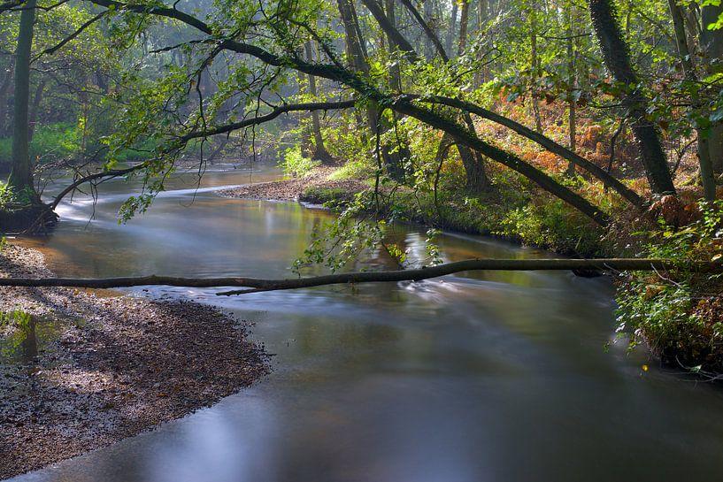 De Swalm van IJsvogels.nl - Corné van Oosterhout