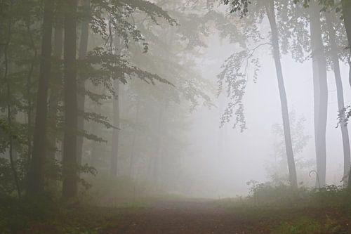 Der Nebelwald van Bernhard Kaiser