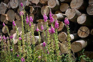 Fingerhut für einen Haufen Baumstämme von Suzanne Schoepe