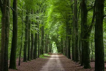Wald bei Nimwegen von Maikel Schrama