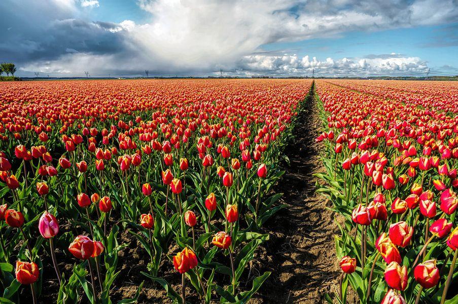 Tulpen uit Dronten van Joris Pannemans - Loris Photography