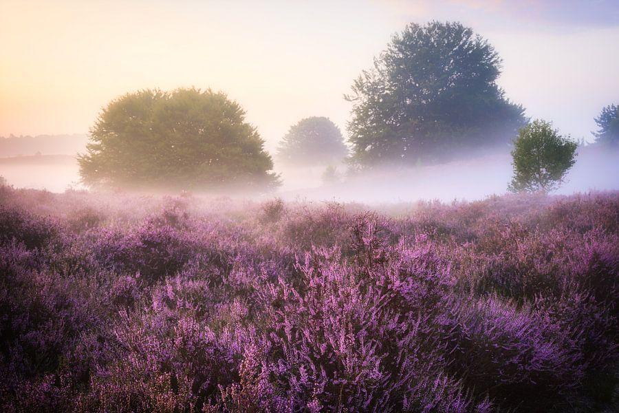 Paars bij zonsopgang. van Fabrizio Micciche