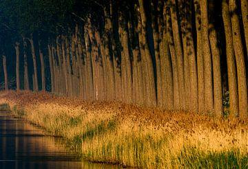 Rangée d'arbres le long d'un canal au coucher du soleil.