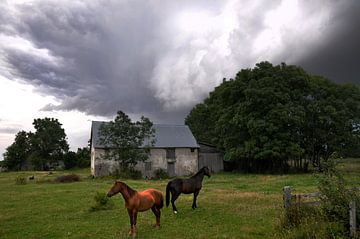 De twee paarden. van Sonja Pixels