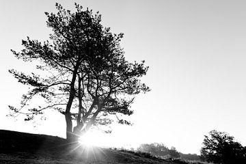 Zonsopkomst/ondergang met boom von Peter van den Berg