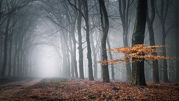 Mistige morgen van Niels Barto
