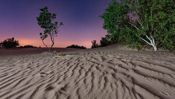 De nacht - Loonse en Drunense Duinen