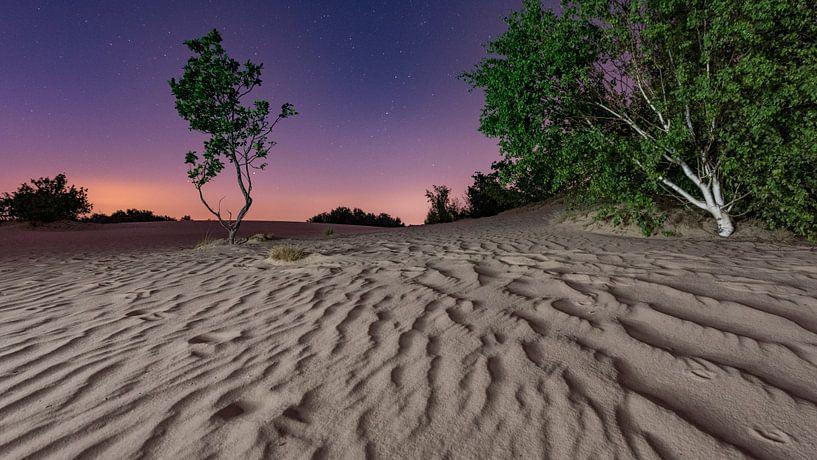 De nacht - Loonse en Drunense Duinen van Laura Vink