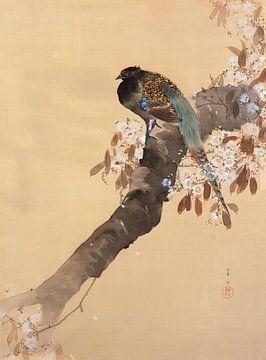 Fasan auf Kirschblütenzweig, Ohara Koson - ca. 1900
