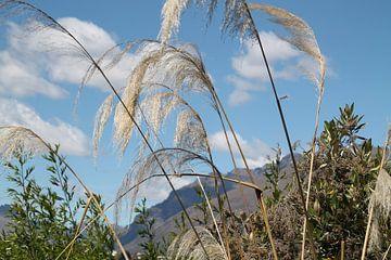Bij Queenstown Nieuw Zeeland van Tineke Mols