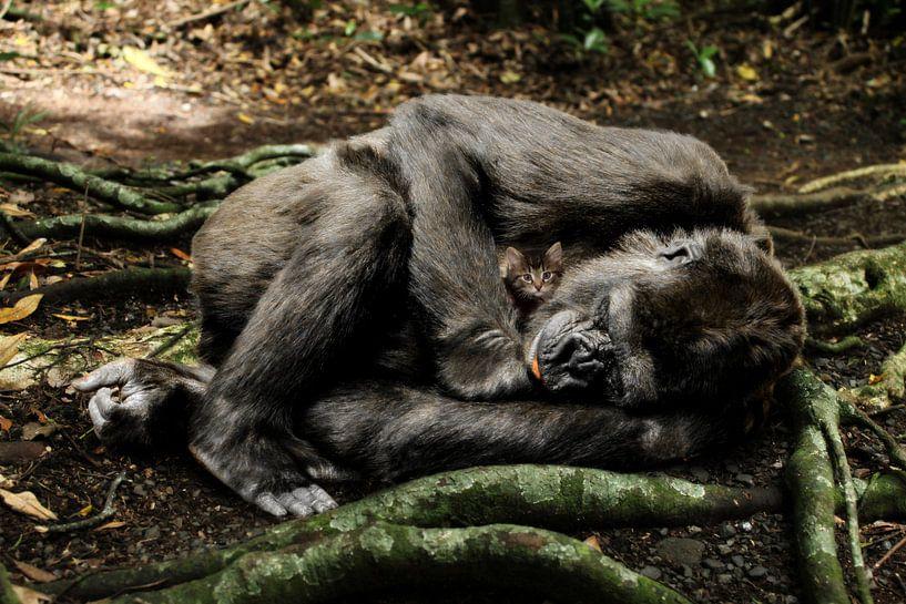 Moederaap Chimpansee met poesje (kitten) van Sarah Richter