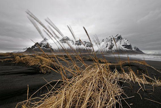 Bergkette hinter schwarzen Sanddünen in Island