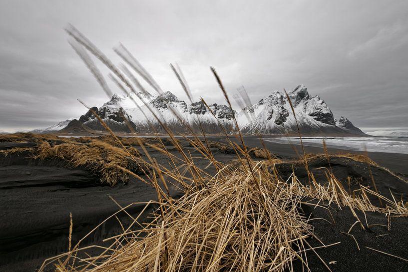 Bergkette hinter schwarzen Sanddünen in Island von Ralf Lehmann