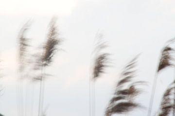 Licht wuivend riet von Anja van Deursen