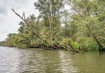 Bomen hangend boven water van Ruud Morijn
