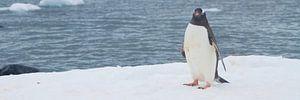 mag ik u voorstellen? de Antarctische zee