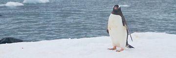 mag ik u voorstellen? de Antarctische zee van Eric de Haan