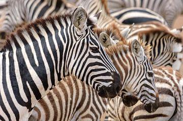 Zebrastreifen von Jos van Bommel
