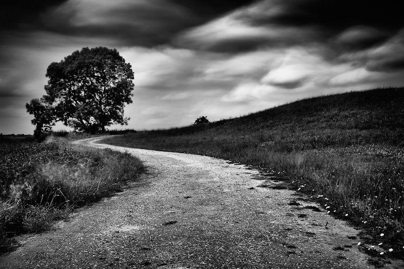 Slingerend weggetje op de dijk  met boom (zwart-wit) van John Verbruggen