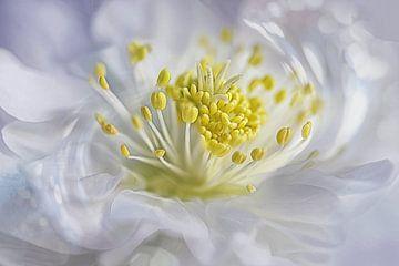 Simple blossom #20 von Lizzy Pe