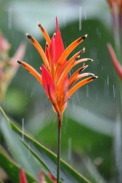 Oranje bloem von Berg Photostore