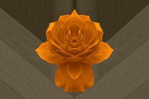 Gouden roos van