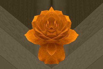 Gouden roos van Corina Scheepers-de Mooij