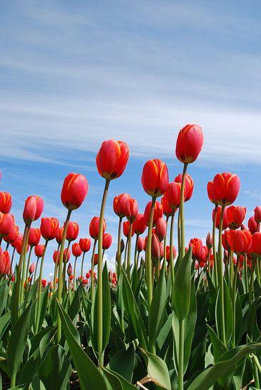 Rode tulpen van Leuntje 's shop