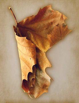 Bruin droog blad op een papieren textuur achtergrond van Klik! Images