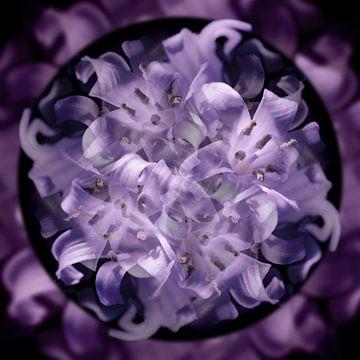 Blumen-Kaleidoskop von Johannes Schotanus