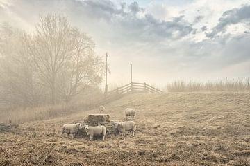 Schafe entlang des Deiches von Monique van Velzen
