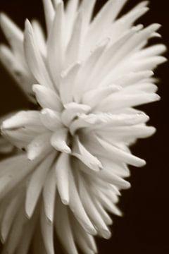 onscherpe kleurloze bloem van milan willems