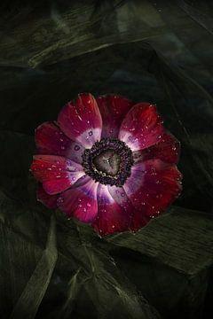 stilleven anemoon bloem von Marga Goudsbloem