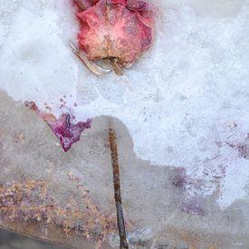Gefrorene Rose von Nanda Bussers